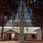 Day 2 Tree of Knowledge Barcaldine